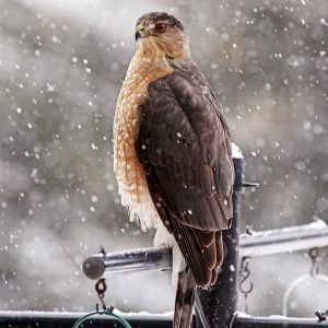The Best 20 Ways to Attract Winter Birds