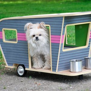 10 Most Outrageous Dog Beds