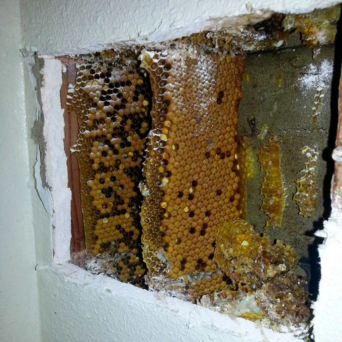 beehive in wall