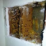 Why Do Some Old Homes Have a Beehive Built Into a Wall?