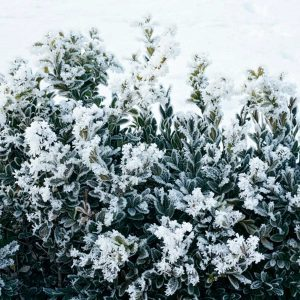 Why You Should Be Pruning Your Trees and Shrubs Right Now
