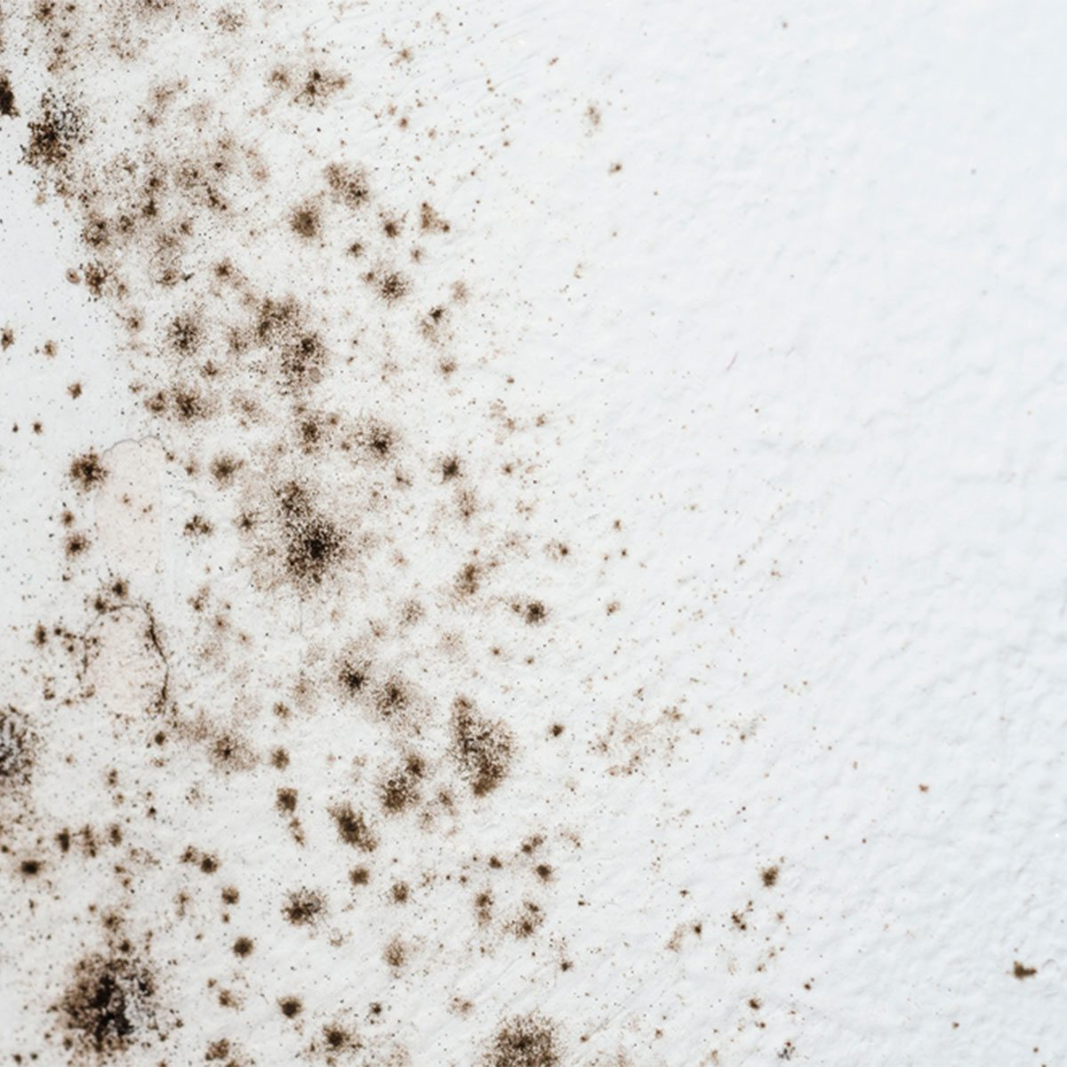 Mold in the wall