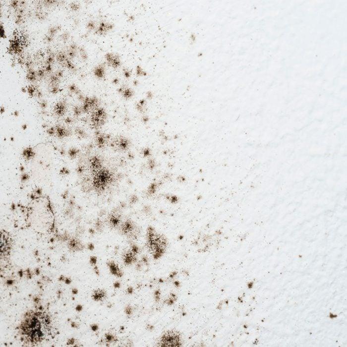 Mold on Bathroom Walls