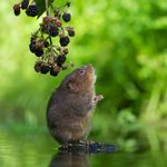 How to Get Rid of and Prevent Garden Voles