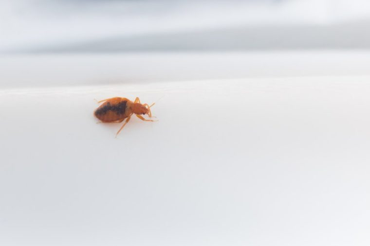The bed bug crawls over the gray paper