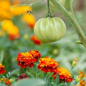 Companion Planting: Why You Should Grow These Plants Side-by-Side