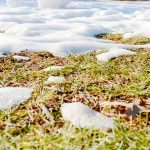 The Quickest Way to Revive Your Lawn After Winter