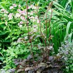 5 Perfect Plants for Chocolate Lovers