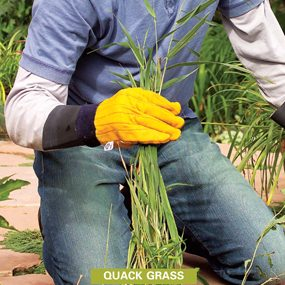 best weed killer for lawns with perennial grassy weeds