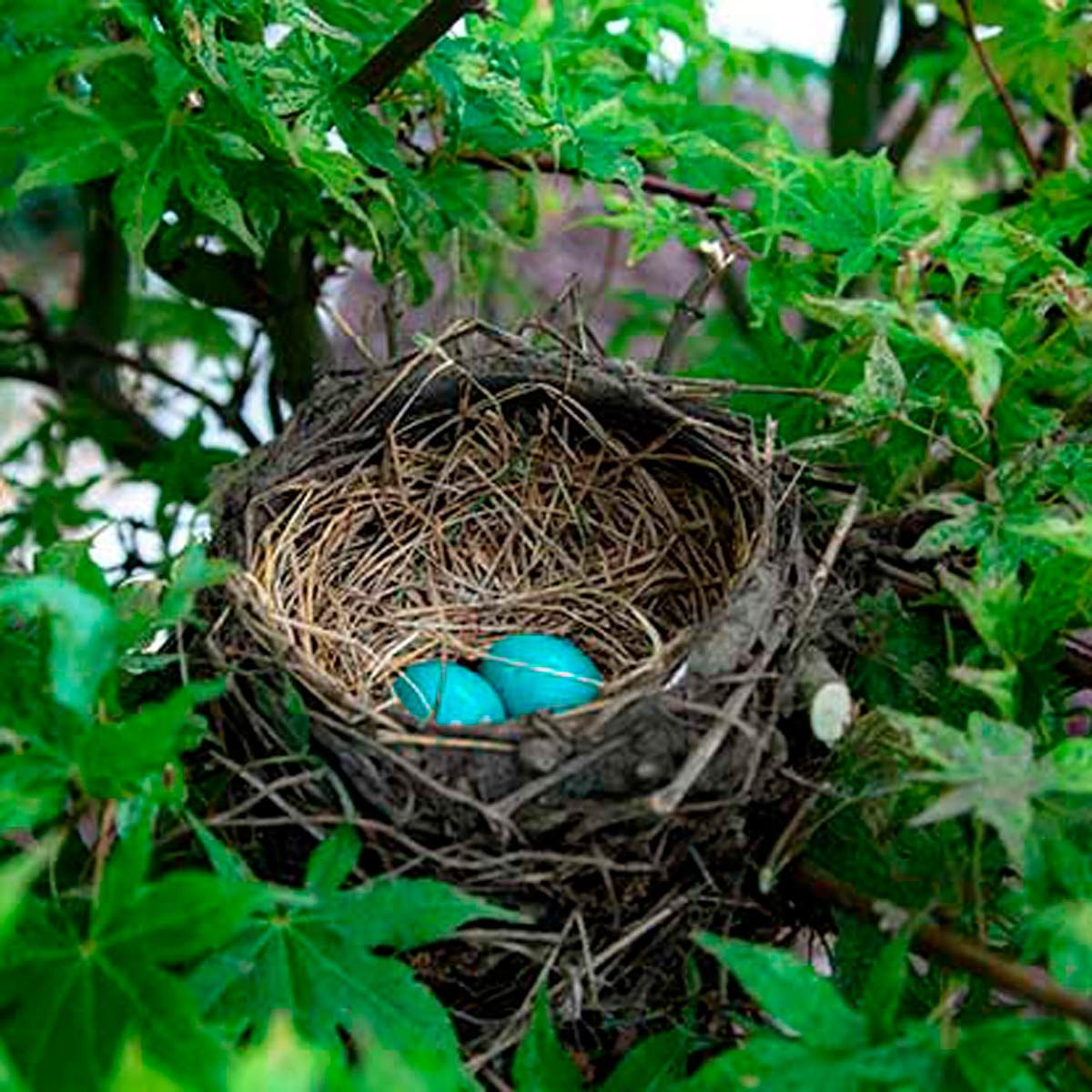 What You Should Do If You Find A Bird Nest Birds And Blooms