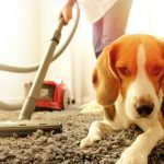 This Is Why Your Dog Is Afraid of Vacuum Cleaners