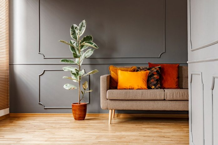 Ficus next to brown couch with orange pillows in dark grey apartment interior. Real photo