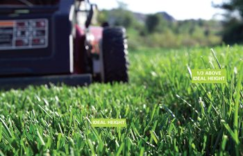 How To Get Rid Of Weeds In Lawn 6 Tactics The Family