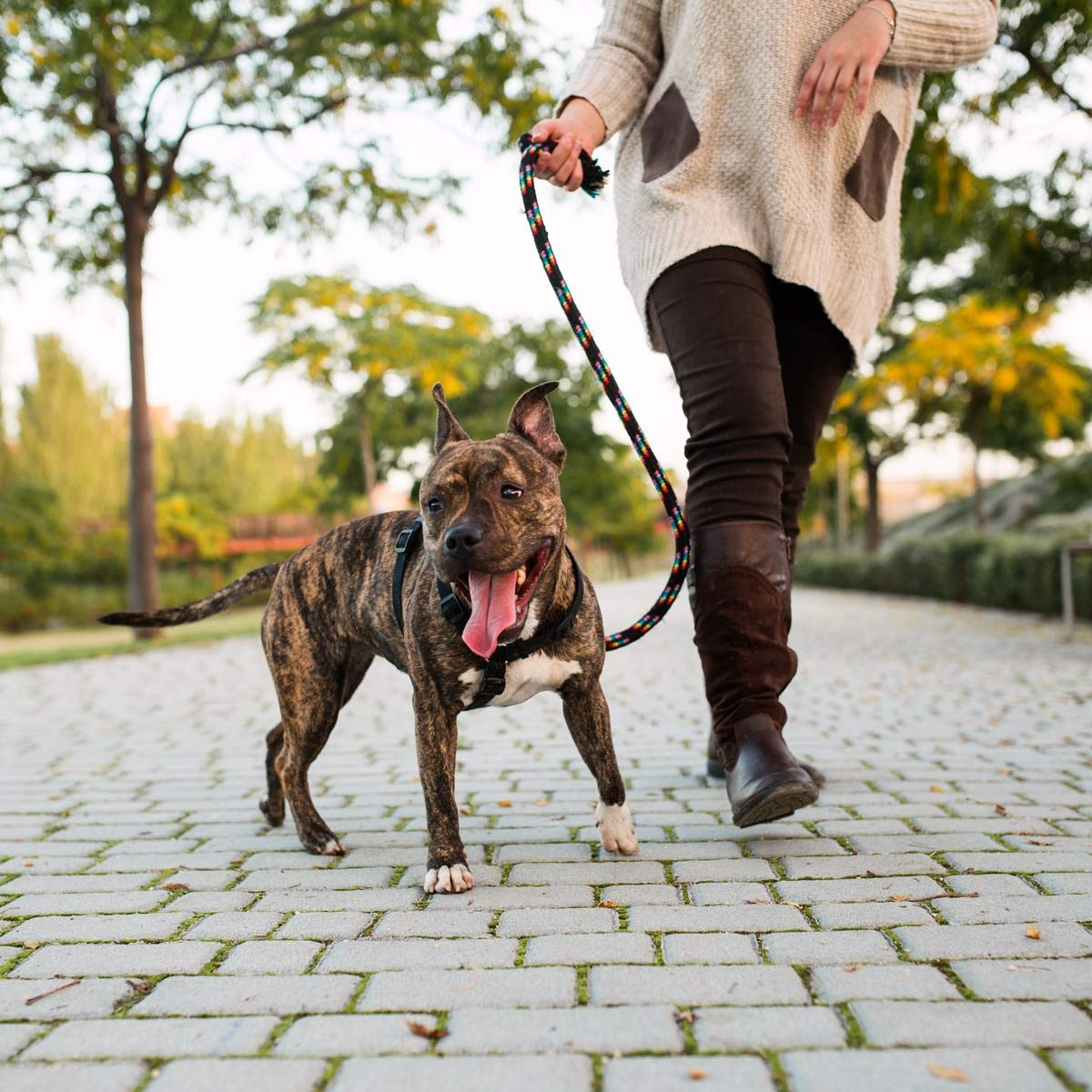 low-view-of-an-anonymous-woman-walking-a-pitbull-at-a-park