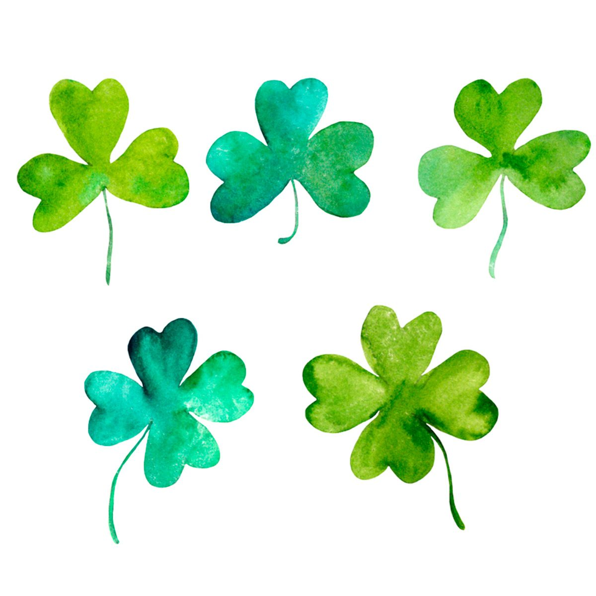 What S The Difference Between Shamrock And Four Leaf Clover