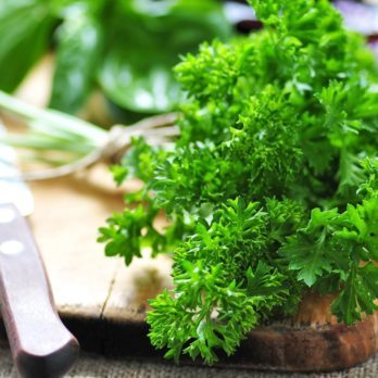 This Is the Best Way to Keep Your Herbs Fresh