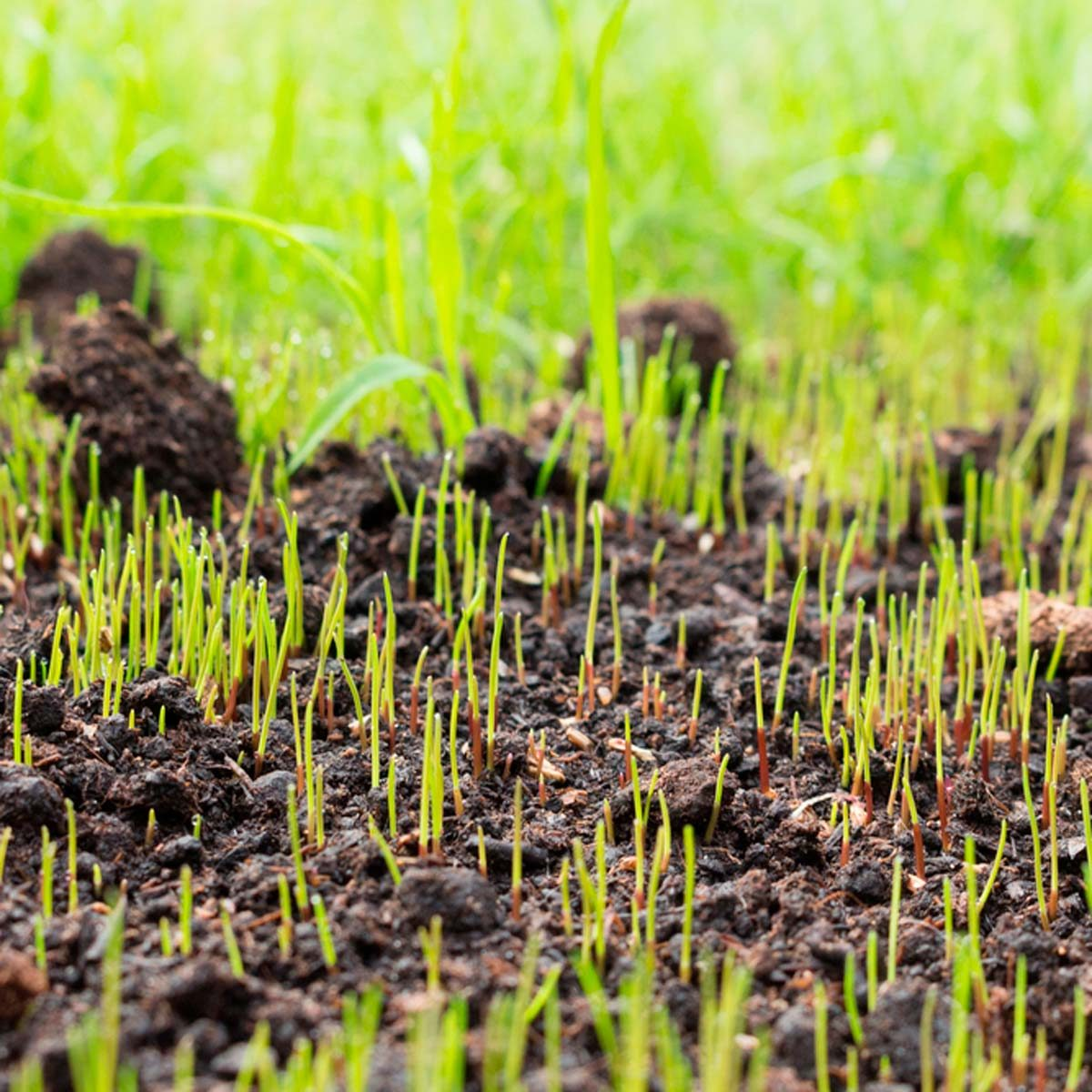 how long does it take for grass seed to grow? | family handyman