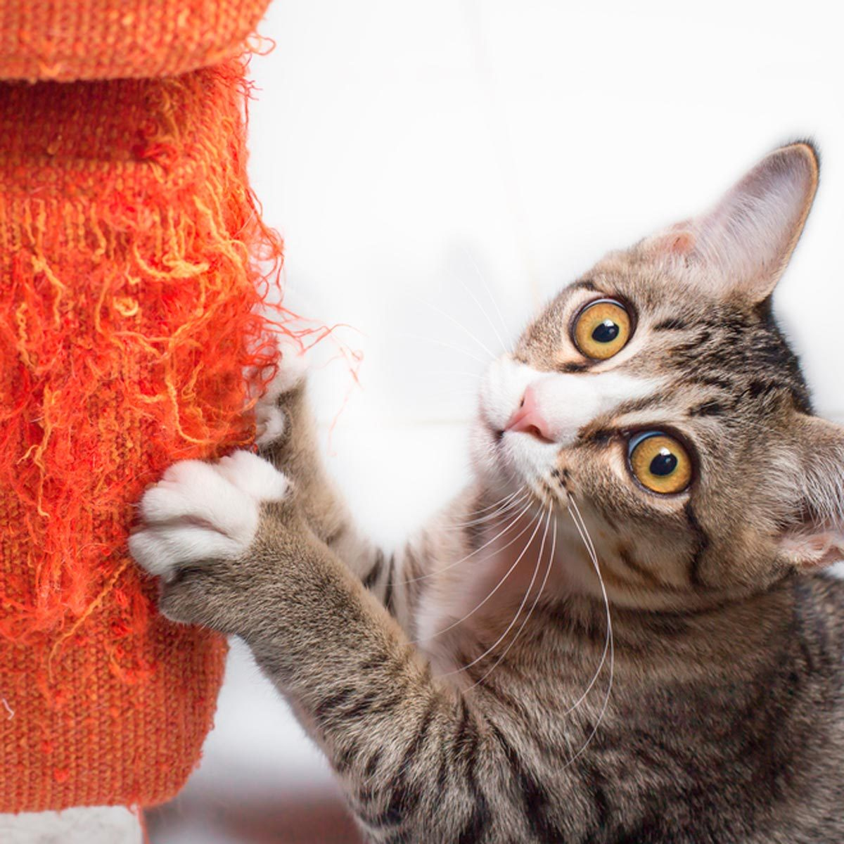 Here S How To Keep Your Cat From Scratching The Furniture Family Handyman