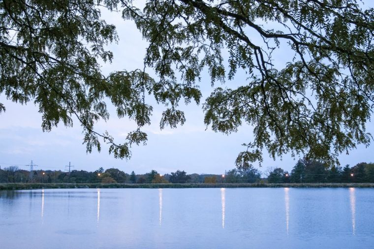 Reflection of lights in a lake with tree branches above in Bloomington, Illinois