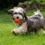 Here's How Much Exercise Your Dog Really Needs