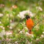 13 Foolproof Tips to Attract Birds to Your Yard