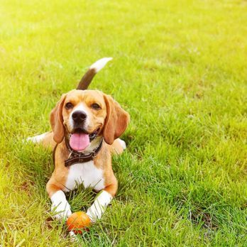28 Safety Tips to Keep Your Dog in Top Shape This Summer