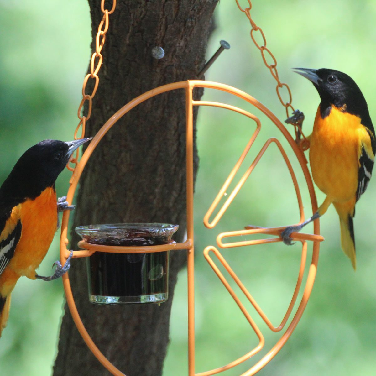 Bird-Feeder-Wheel