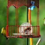 41 Really Cute Bird Feeders