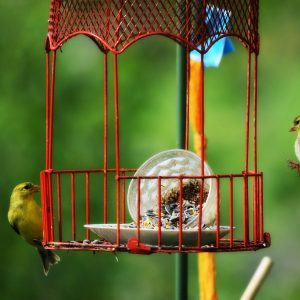 41 Really Cute Bird Feeders