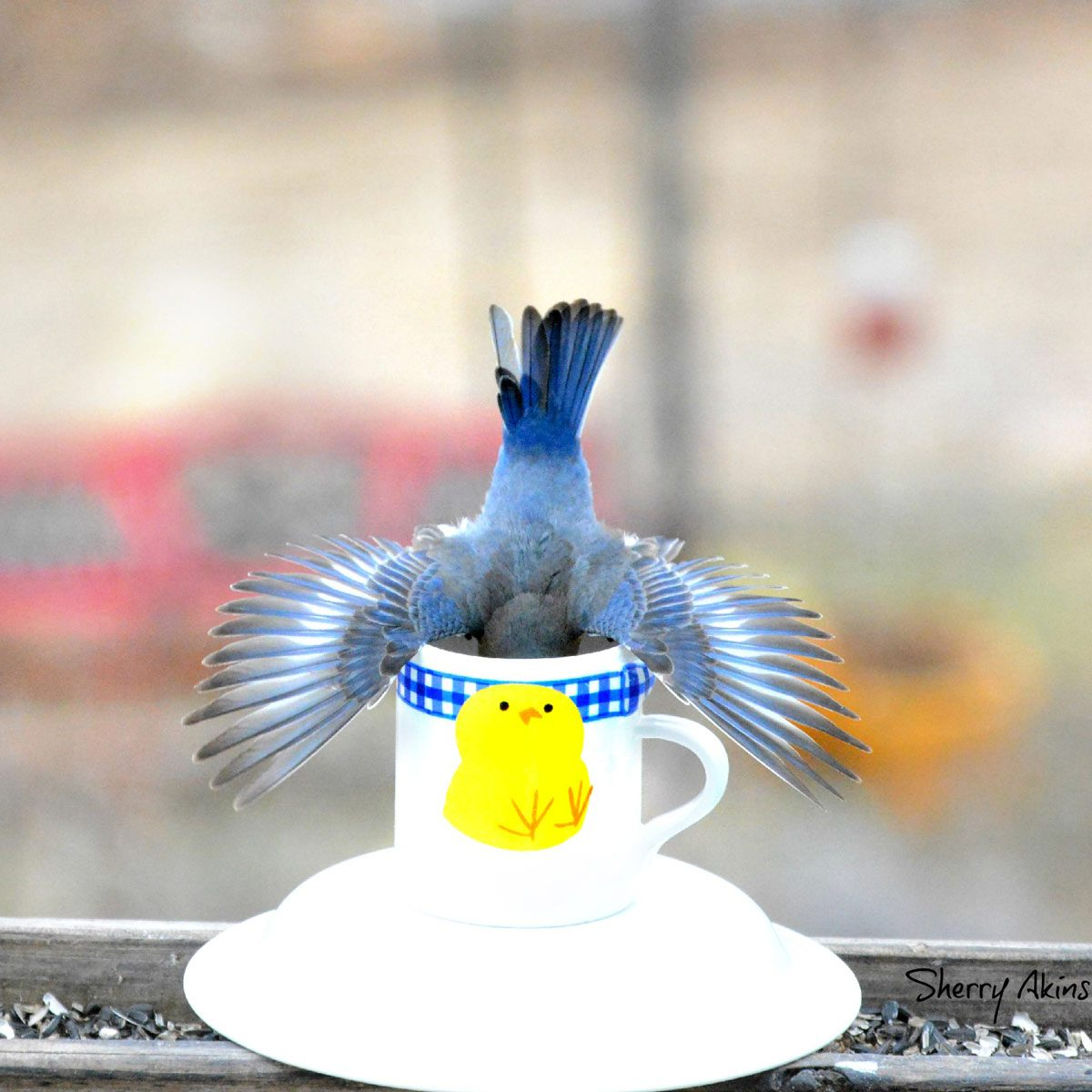 Coffee-Cup-Bird-Feeder