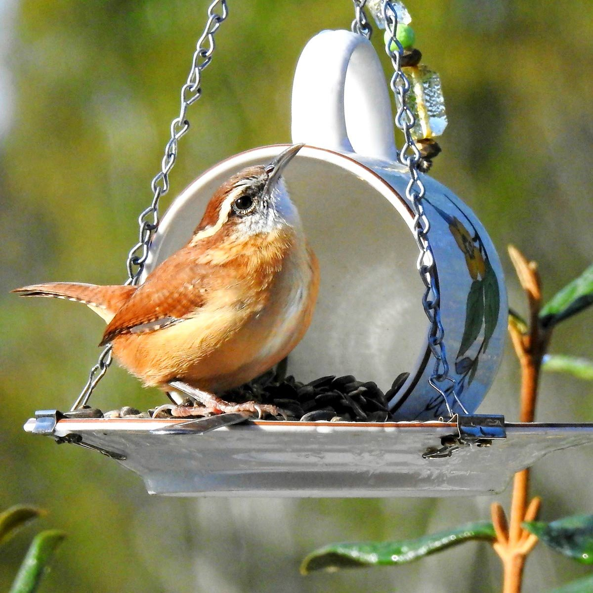 Cup-and-Saucer-Bird-Feeder