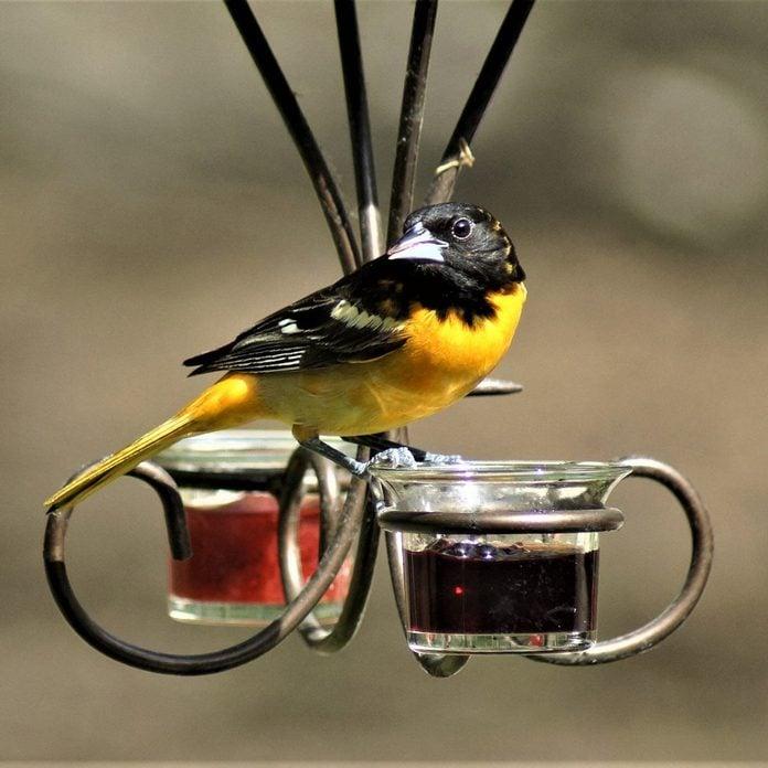 Jelly-Bird-Feeder