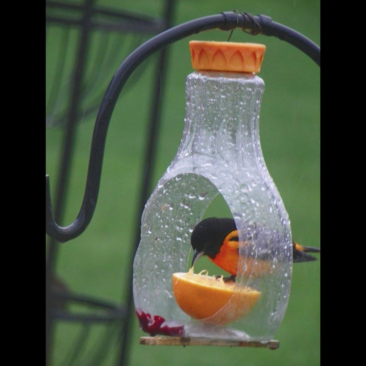 Plastic-Bottle-Bird-Feeder