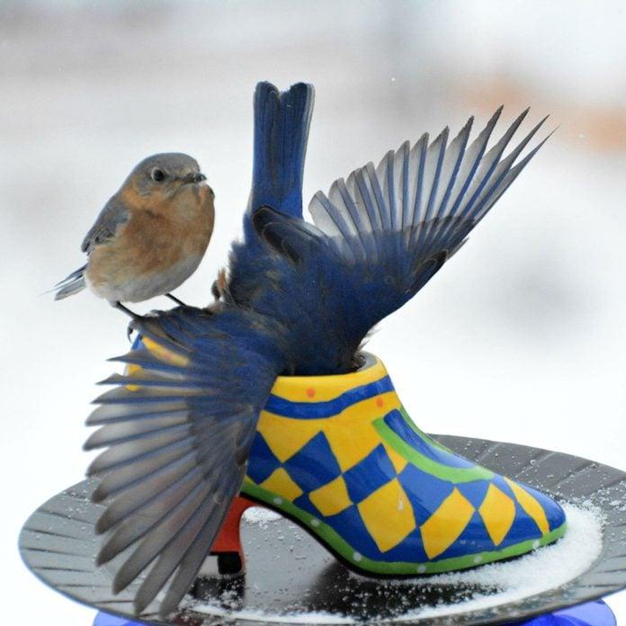 Shoe-Bird-Feeder