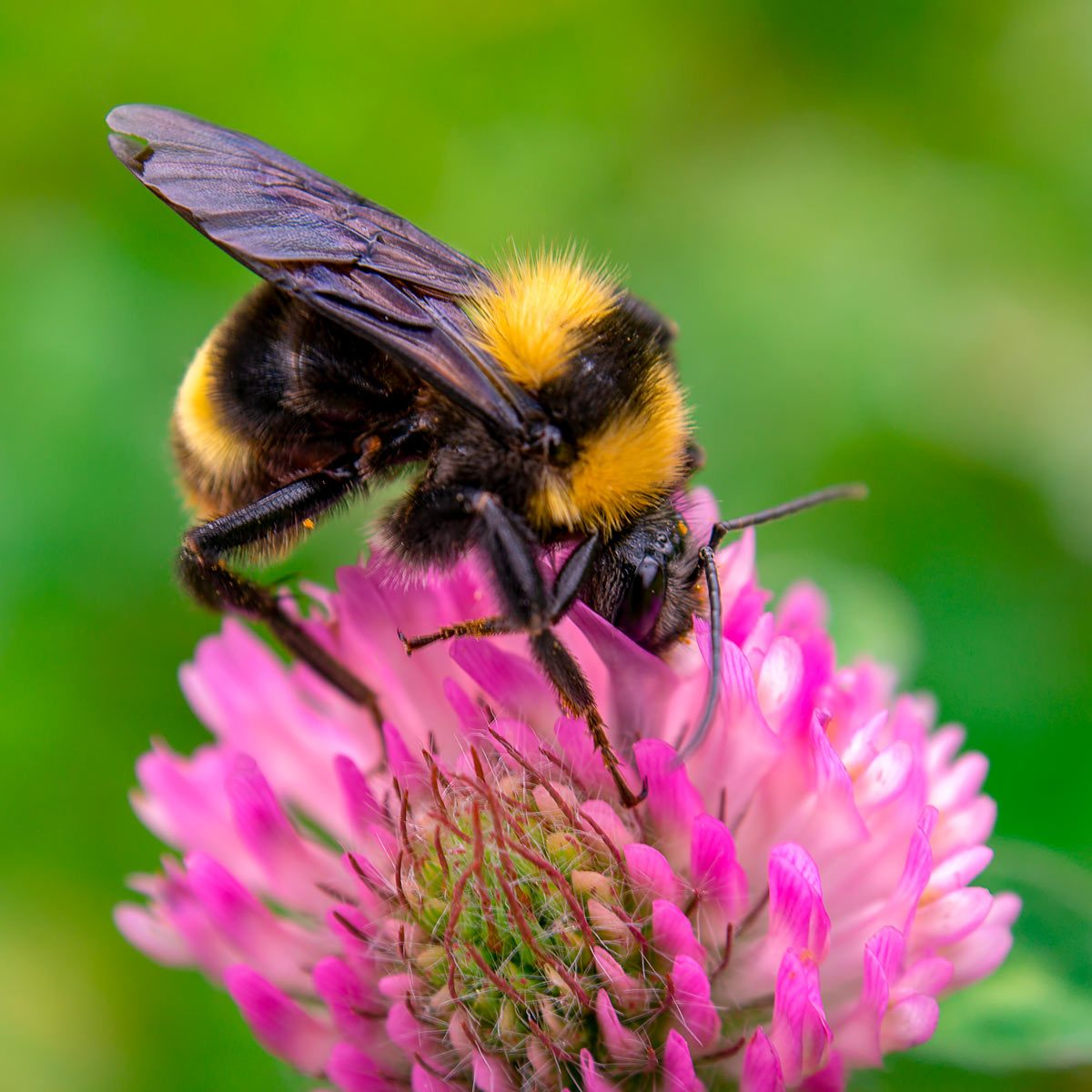 Here's Why You Shouldn't Kill Bees in Your Yard | Family ...