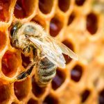 Simple Things You Can Do at Home to Help Save the Bees