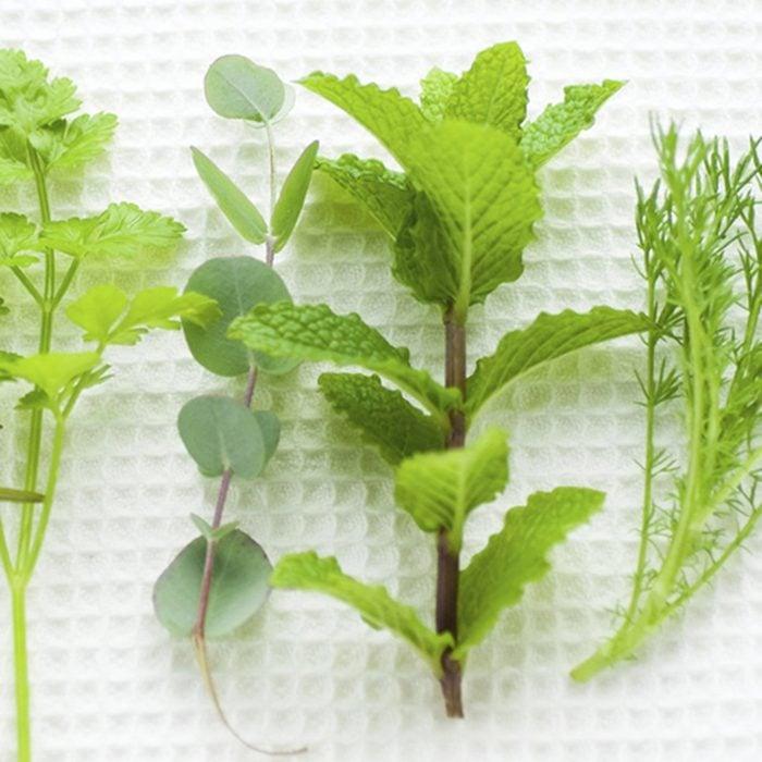 An Image of Herb; Shutterstock ID 206542279; Job (TFH, TOH, RD, BNB, CWM, CM): TOH