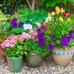The 6 Most Common Plant Problems Solved