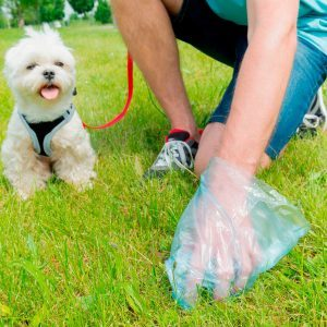 Should You Pick Up Your Dog's Poop?