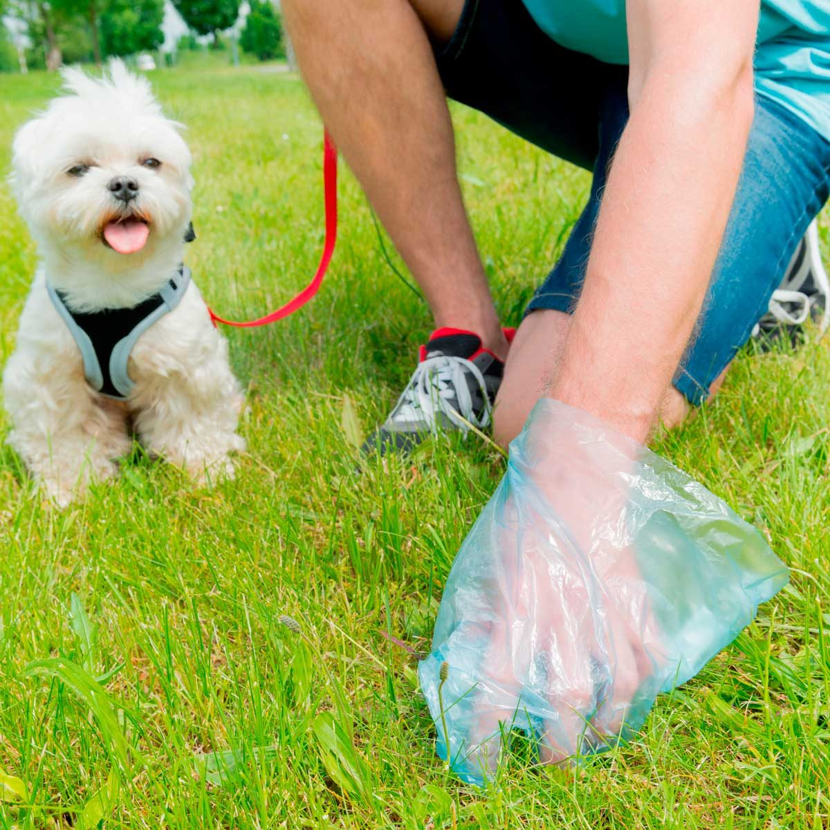 Pet Waste Removal In Geist IN