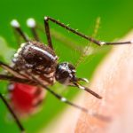 How to Deter Mosquitoes: 7 Mosquito Repellent Tips