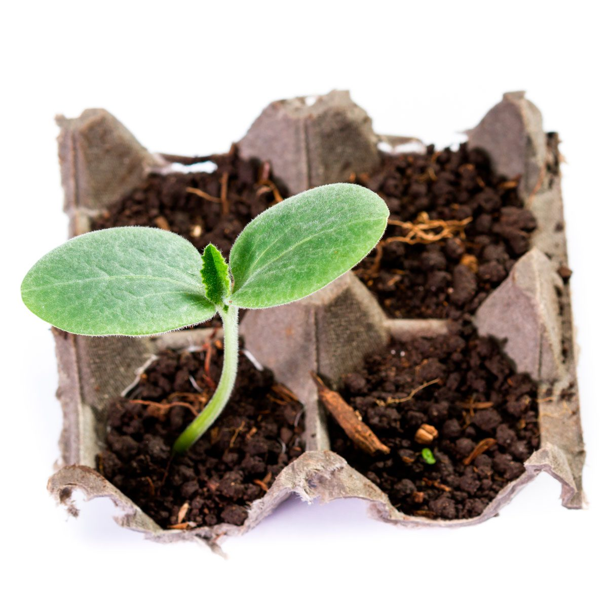12 Common Household Items You Can Upcycle Into Garden Seed Starters
