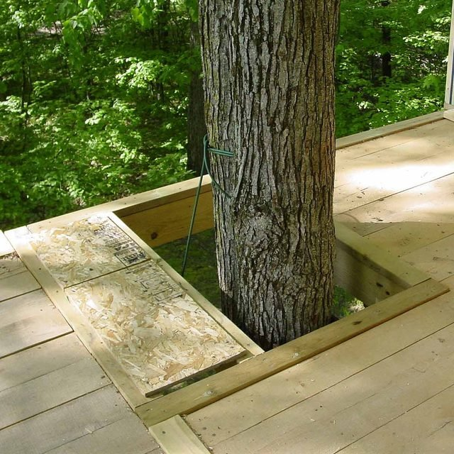 treehouse building tips leave gaps around the tree