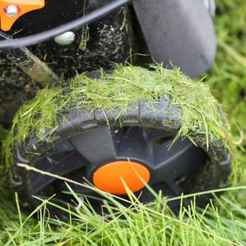 Here's Why You Shouldn't Mow Your Grass When It's Wet