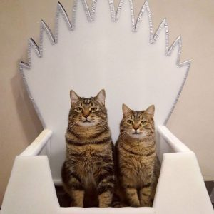 Let Your Cat Reign on the Iron Throne with These Game of Thrones Beds