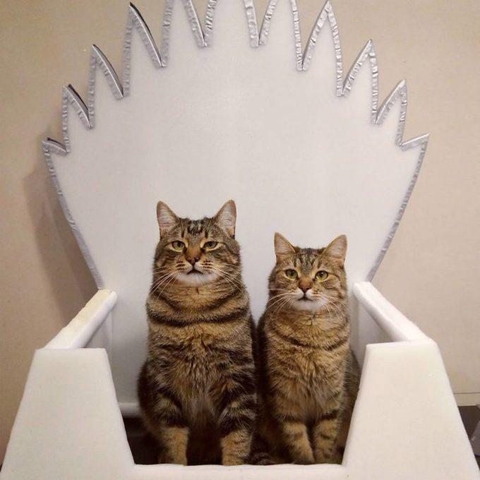 Winterfell-Cat-Throne