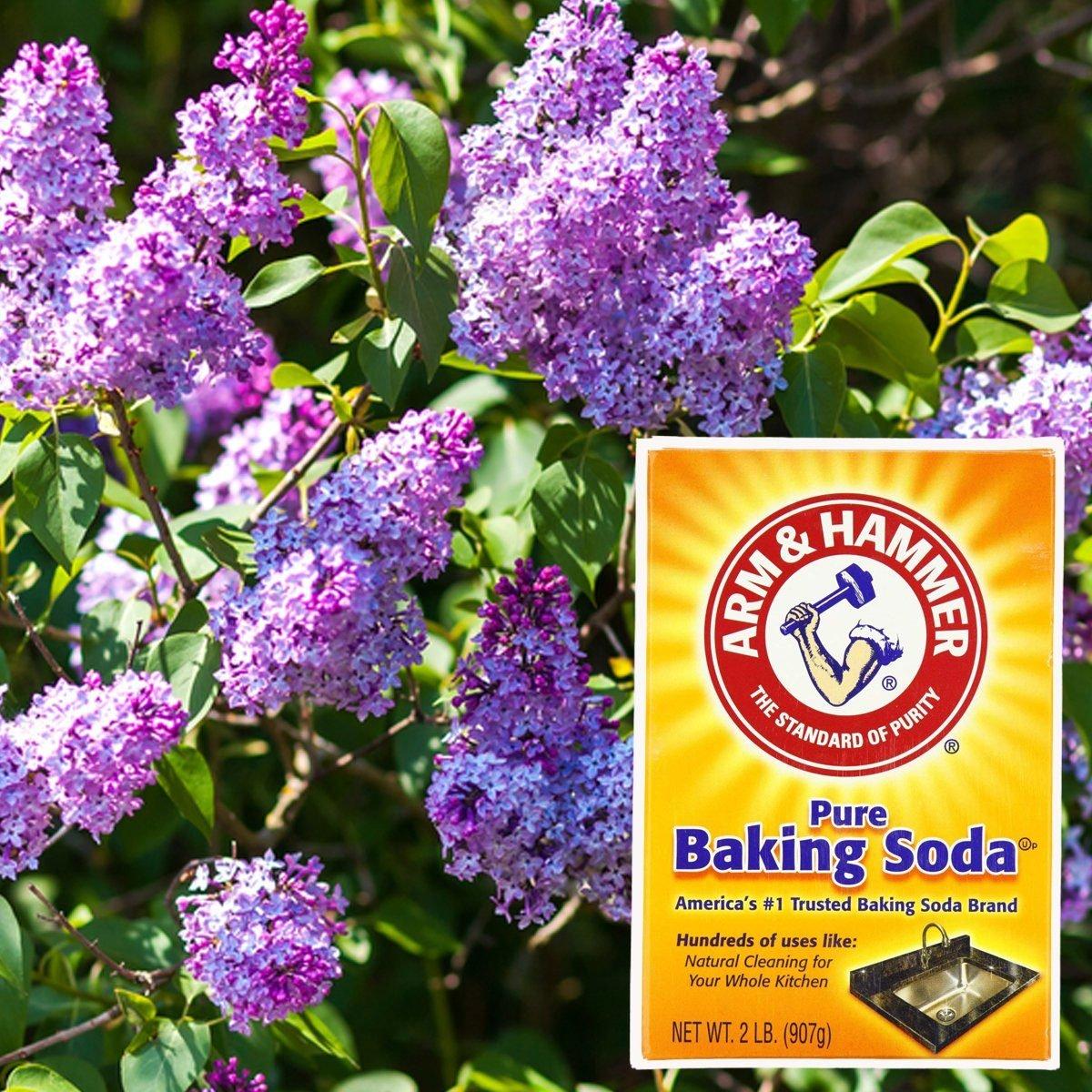 10 Secret Kitchen Ingredients That Can Help Your Garden Grow