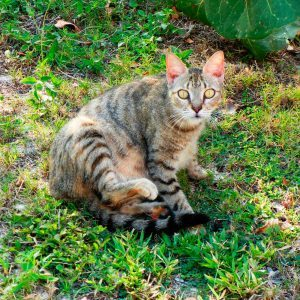 How to Keep Stray Cats Out of Your Yard