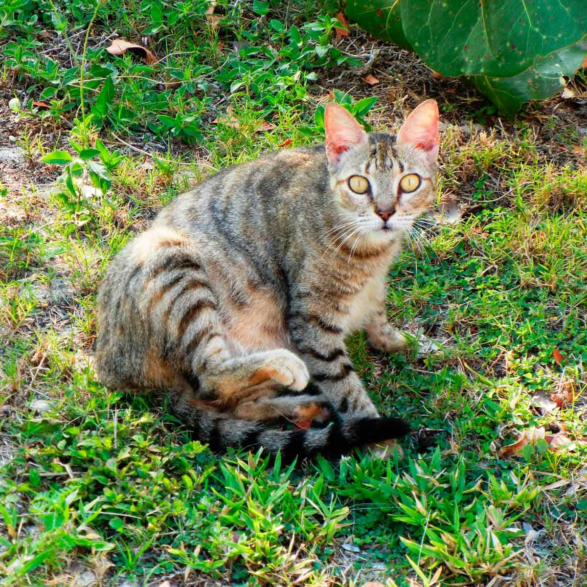 How to Keep Stray Cats Out of Your Yard | Family Handyman