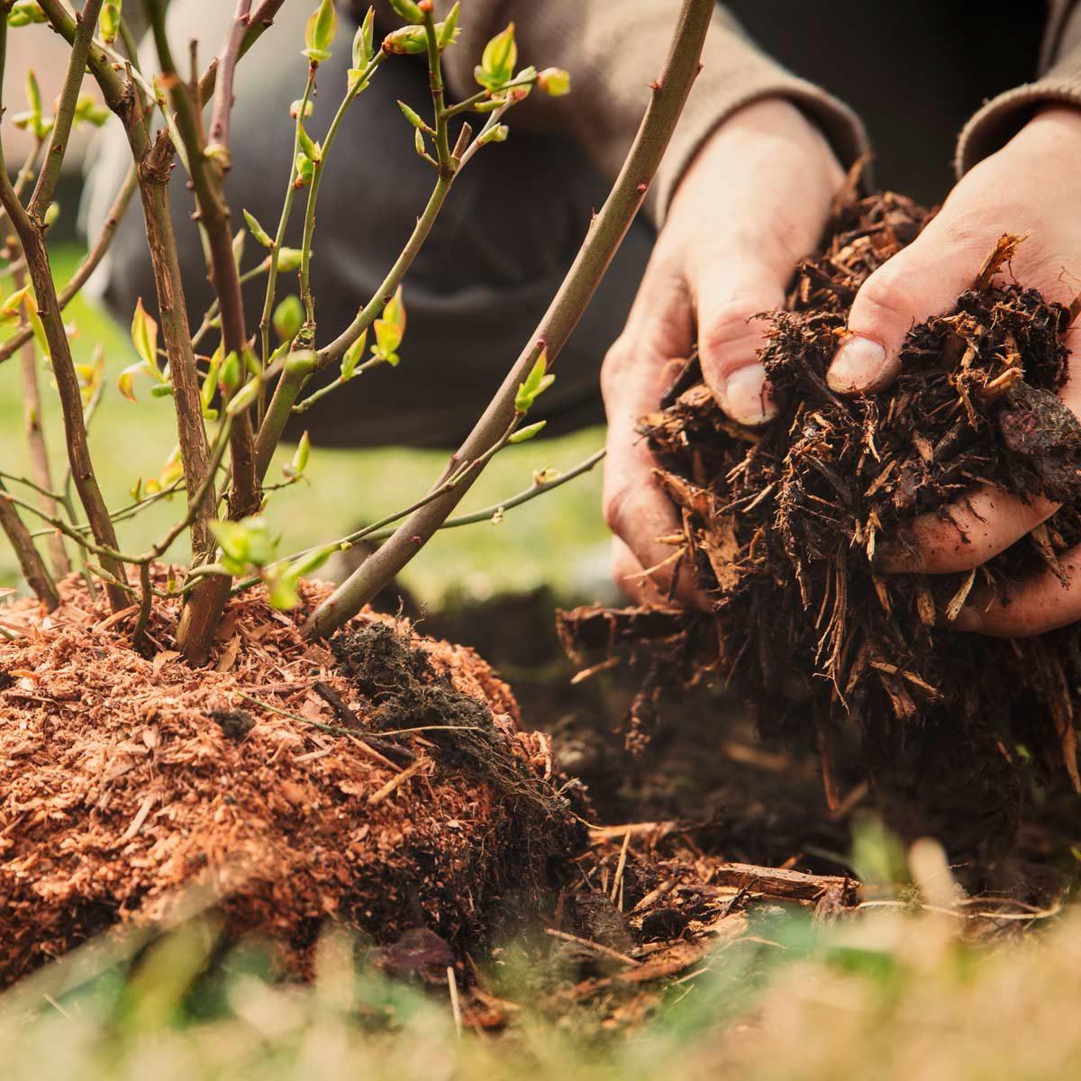 10 Garden Mistakes You Keep Making